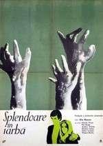 Splendor in the Grass – Splendoare în iarbă (1961) – filme online