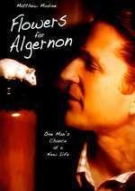 Flowers for Algernon - Flori pentru Algernon (2000) - filme online