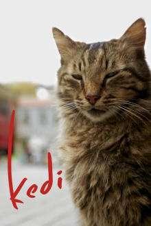 Kedi (2016) – filme online