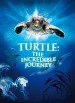 Turtle: The Incredible Journey – Broscuţa – incredibila călatorie (2009)