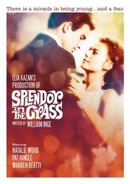 Splendor in the Grass - Splendoare în iarbă (1961)
